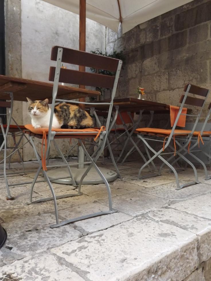 Cats dub